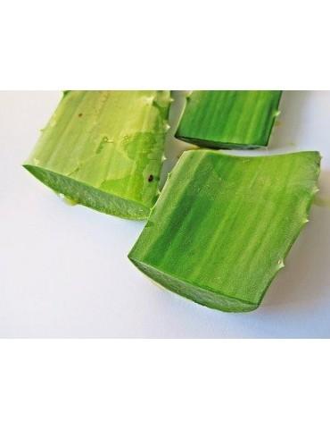 Huile d'Aloe Vera (Aloe Barbadensis & Helianthus annuus) 1L